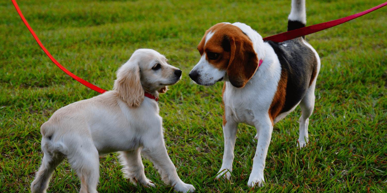 You are currently viewing Come passeggiare con il cane e perchè