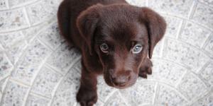 Cucciolo in arrivo: come comportarsi?