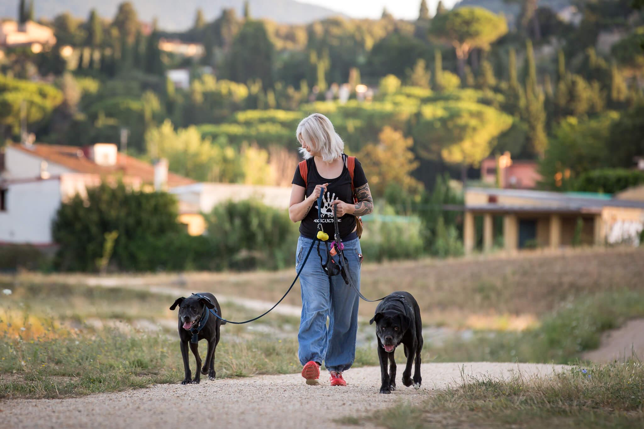"""You are currently viewing Molossi: sono cani """"cattivi""""?"""