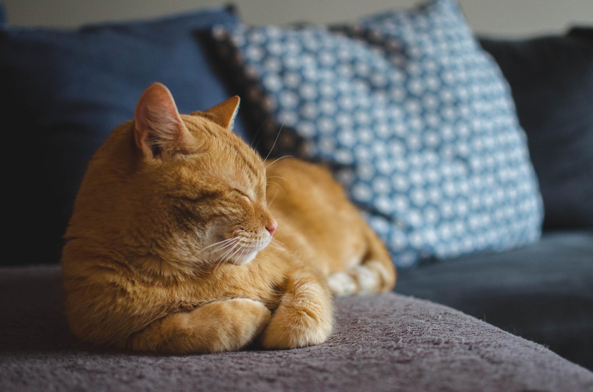 You are currently viewing Malattia renale cronica nel cane e nel gatto