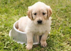 Quando il vostro cane vomita dobbiamo sempre preoccuparci?