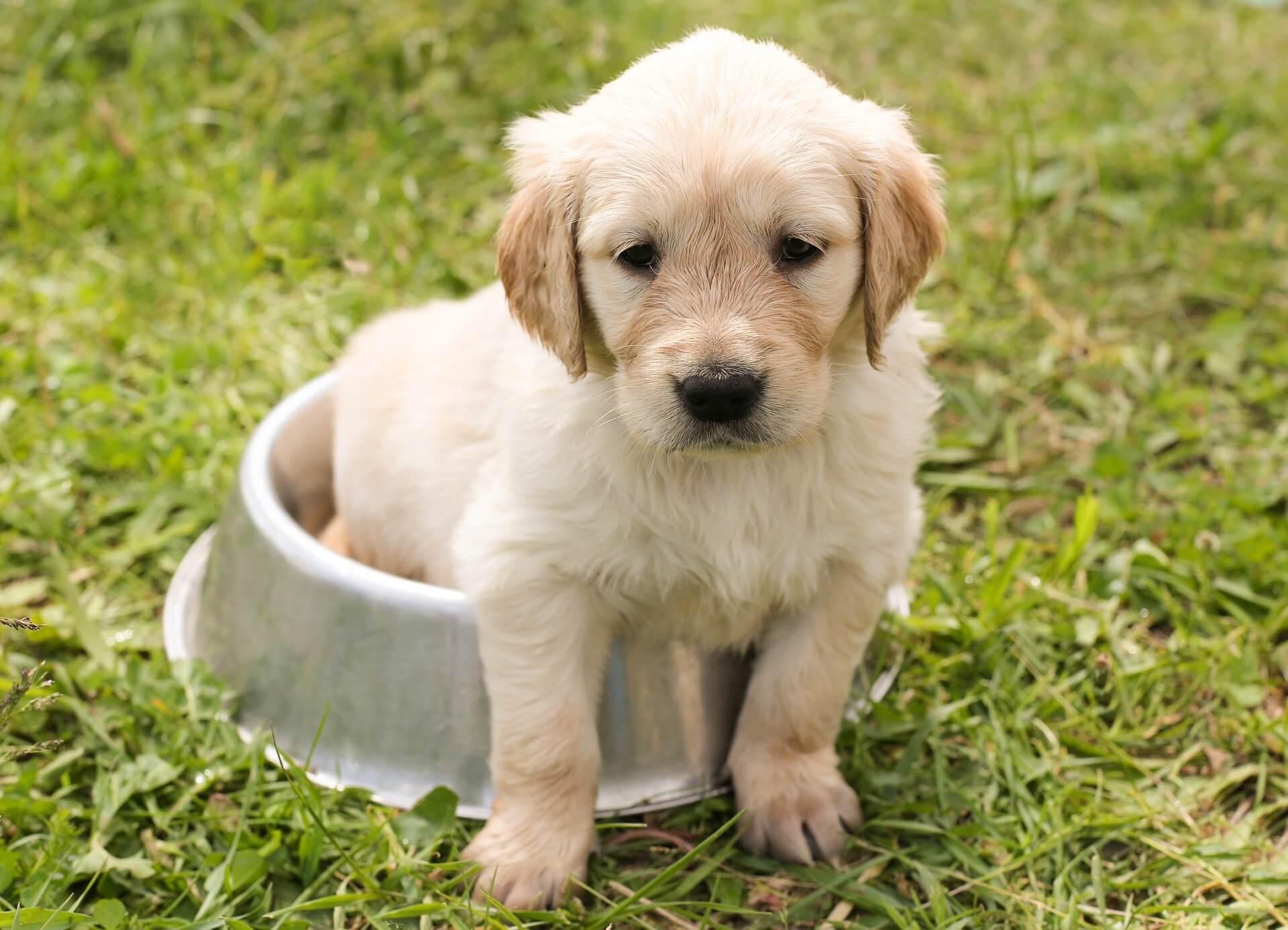 You are currently viewing Quando il vostro cane vomita dobbiamo sempre preoccuparci?