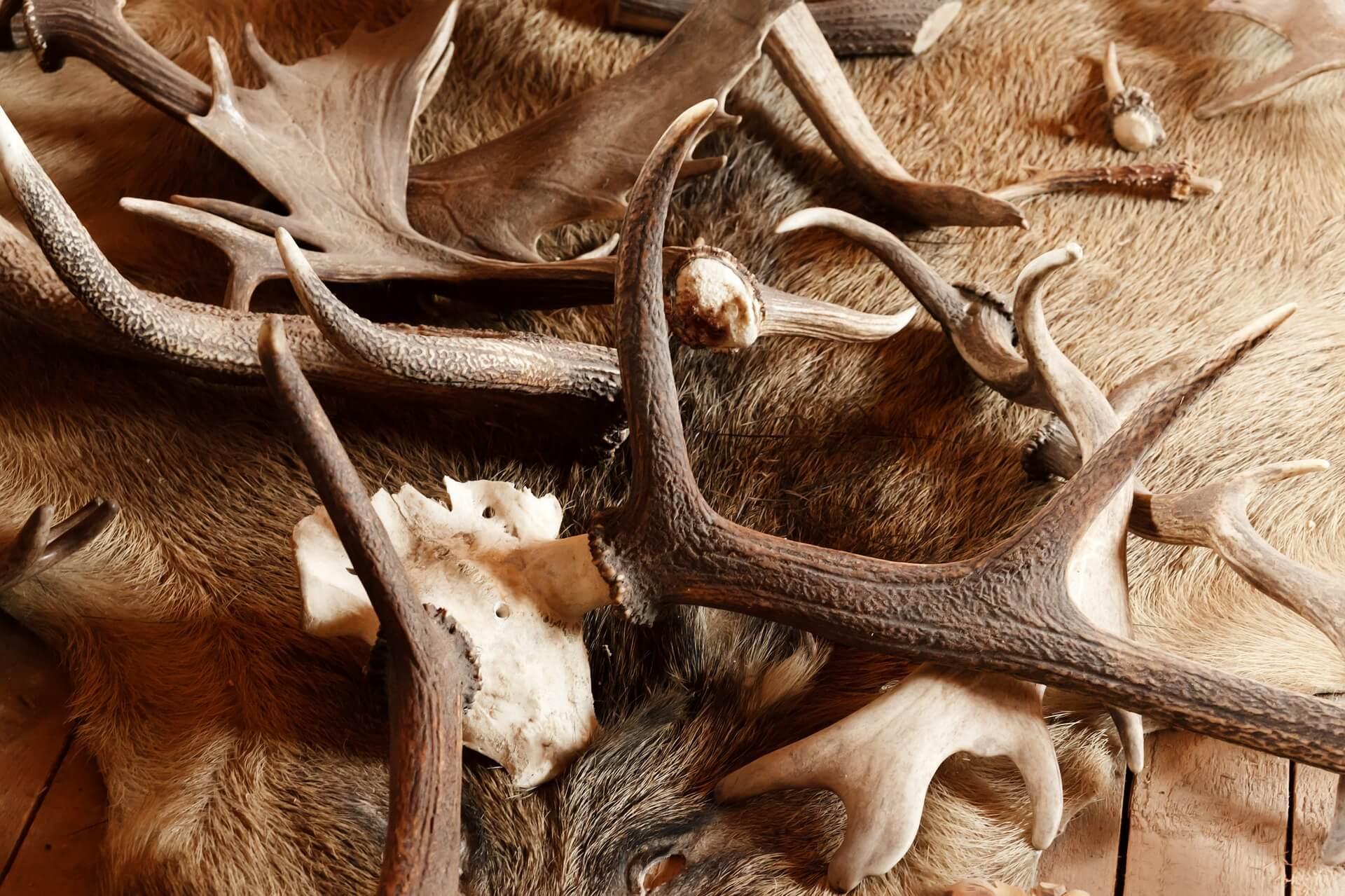 You are currently viewing Corno di cervo per cani: a cosa serve?