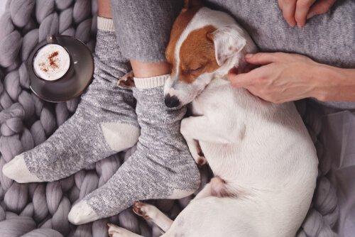 i cani leccano i piedi