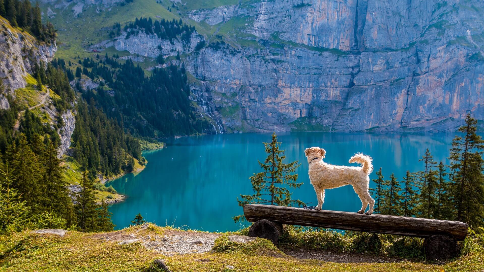 You are currently viewing Età del cane come si calcola in anni umani?