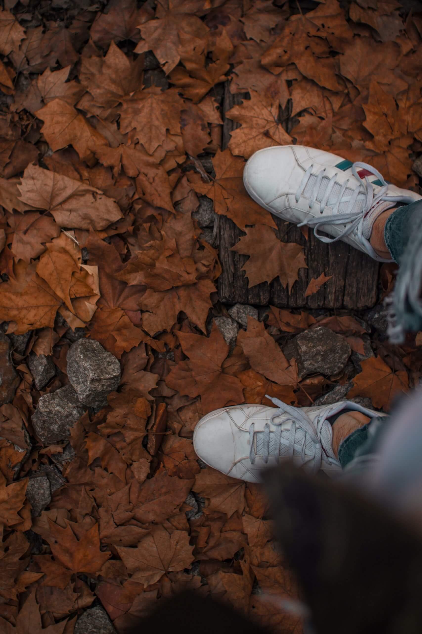 You are currently viewing I fiori per l'autunno: come ripartire