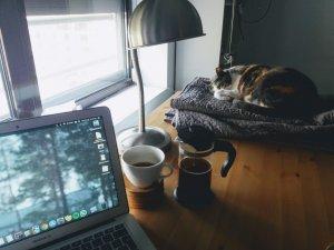 Read more about the article Si ricomincia a lavorare: come aiutare micio e fido a stare soli?