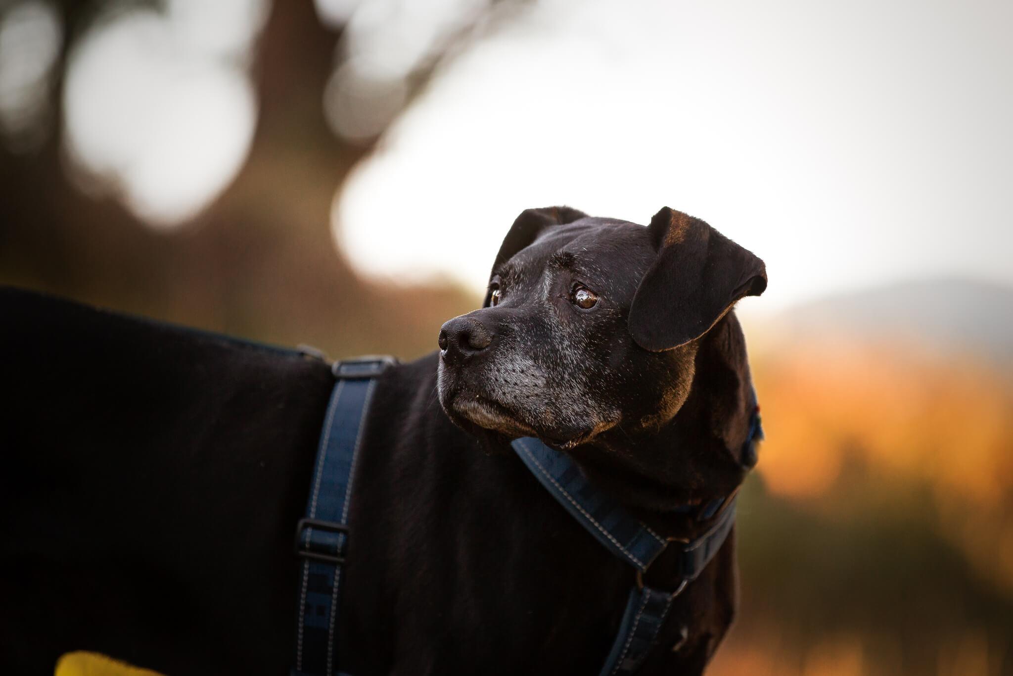 You are currently viewing Molossi e cani neri: conflitti e pregiudizi