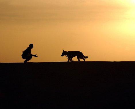 aree cani