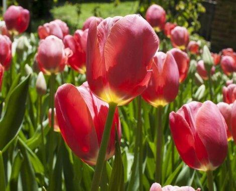 preparare il corpo all'arrivo della primavera
